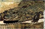 repteis reptil